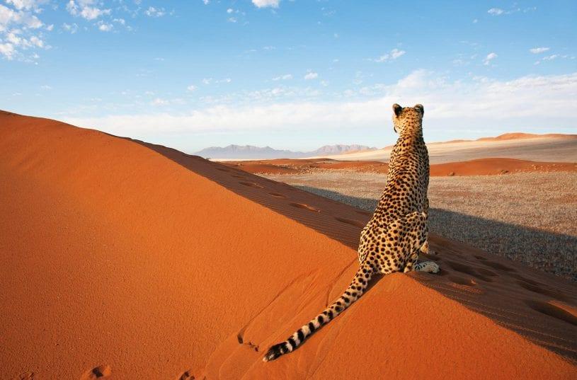 Visit Nambia
