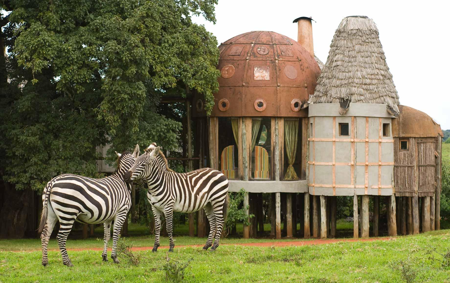Zebras at Ngorongoro Crater Lodge