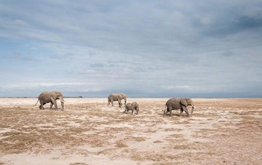 Elephant Family in Amboseli