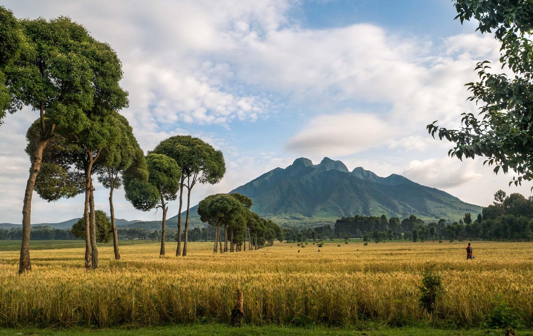 Beautiful Volcanoes National Park, Rwanda