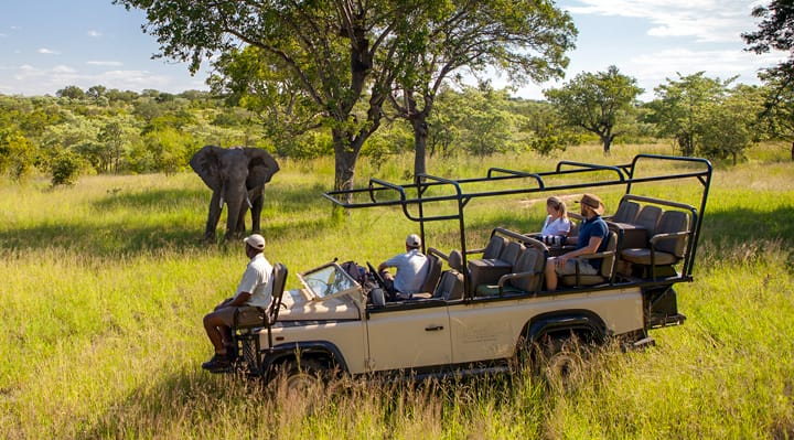 Safari Trip in Safari Vehicle - Watching Elephant Experience