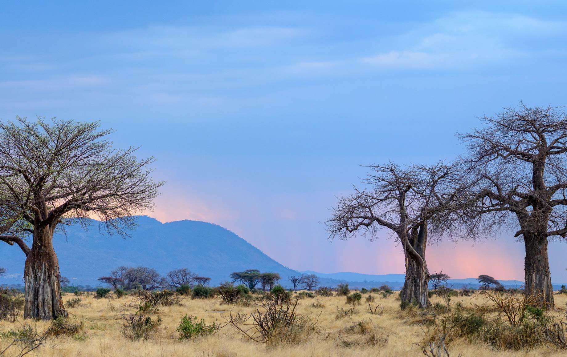 Selous and Ruha Safari Camps