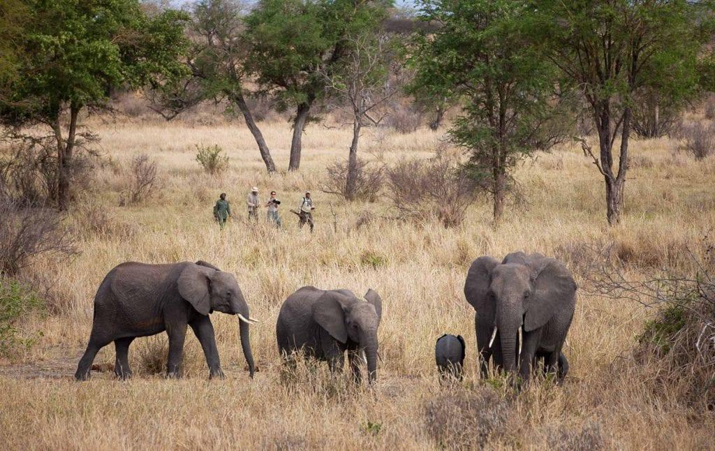 Selous and Ruaha Safari Camps