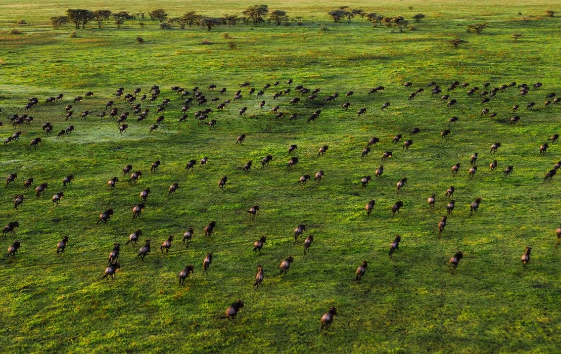 Wildlife at Serengeti National Park