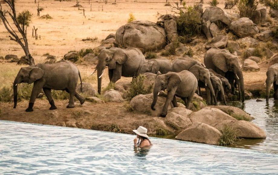 Elephants at Serengeti national park