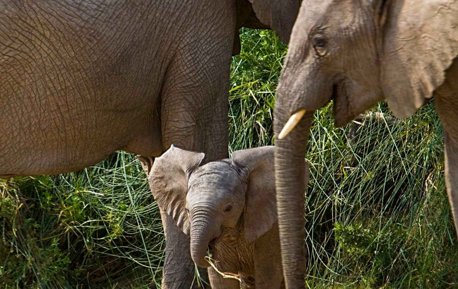 Wild elephants at Skeleton Coast Kaokoveld