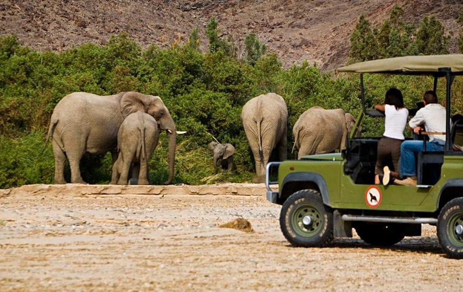 Watching family of wild elephants at Skeleton Coast Kaokoveld