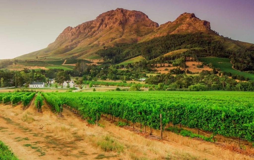 Green fields of Cape Winelands