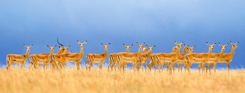 Tanzania Spectacular
