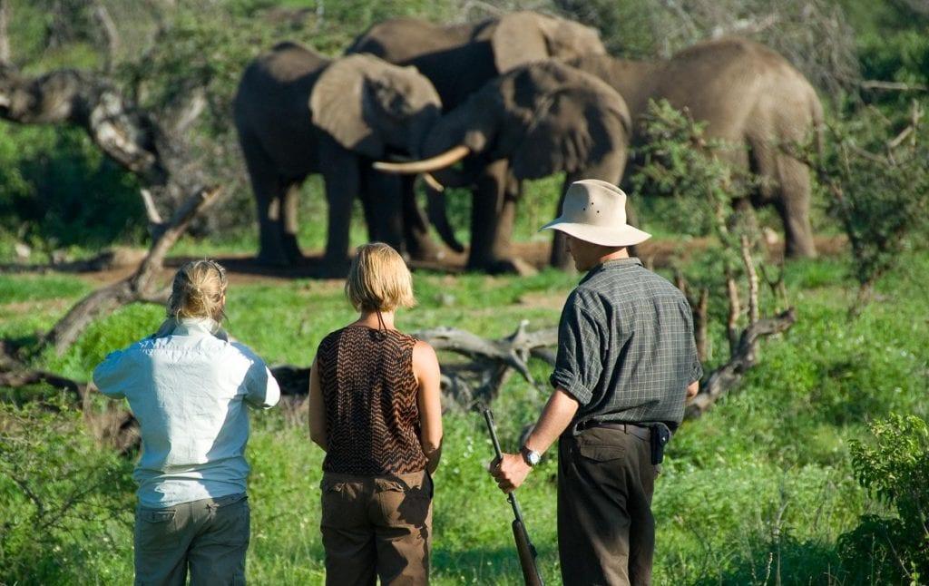 Walking into safari