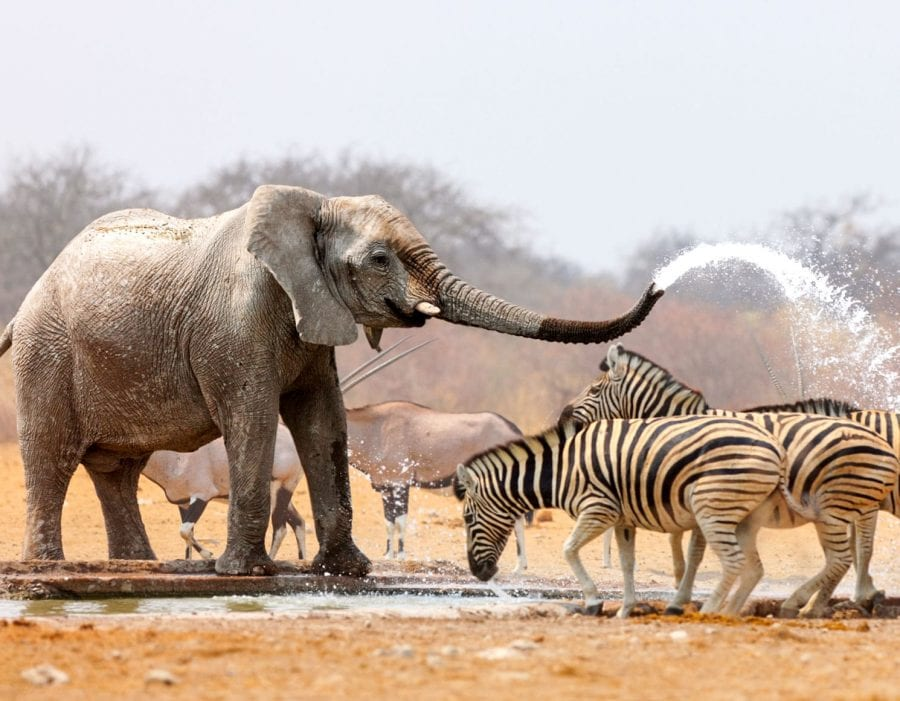 Wildlife Safari Experience