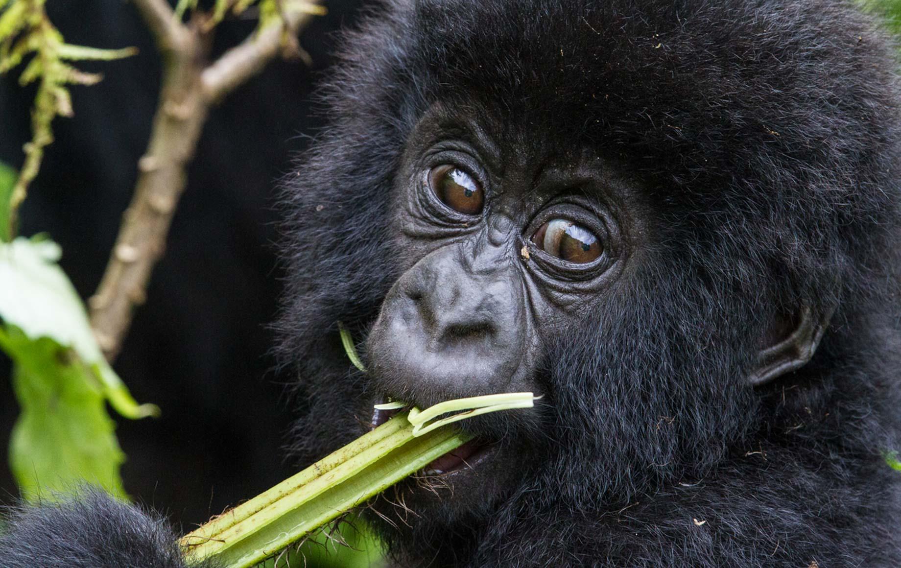 Monkey eating tree at African Safari