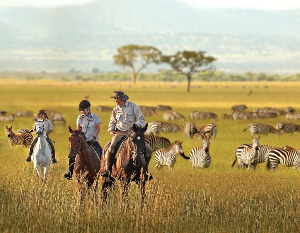 Three people horseback riding near zebra