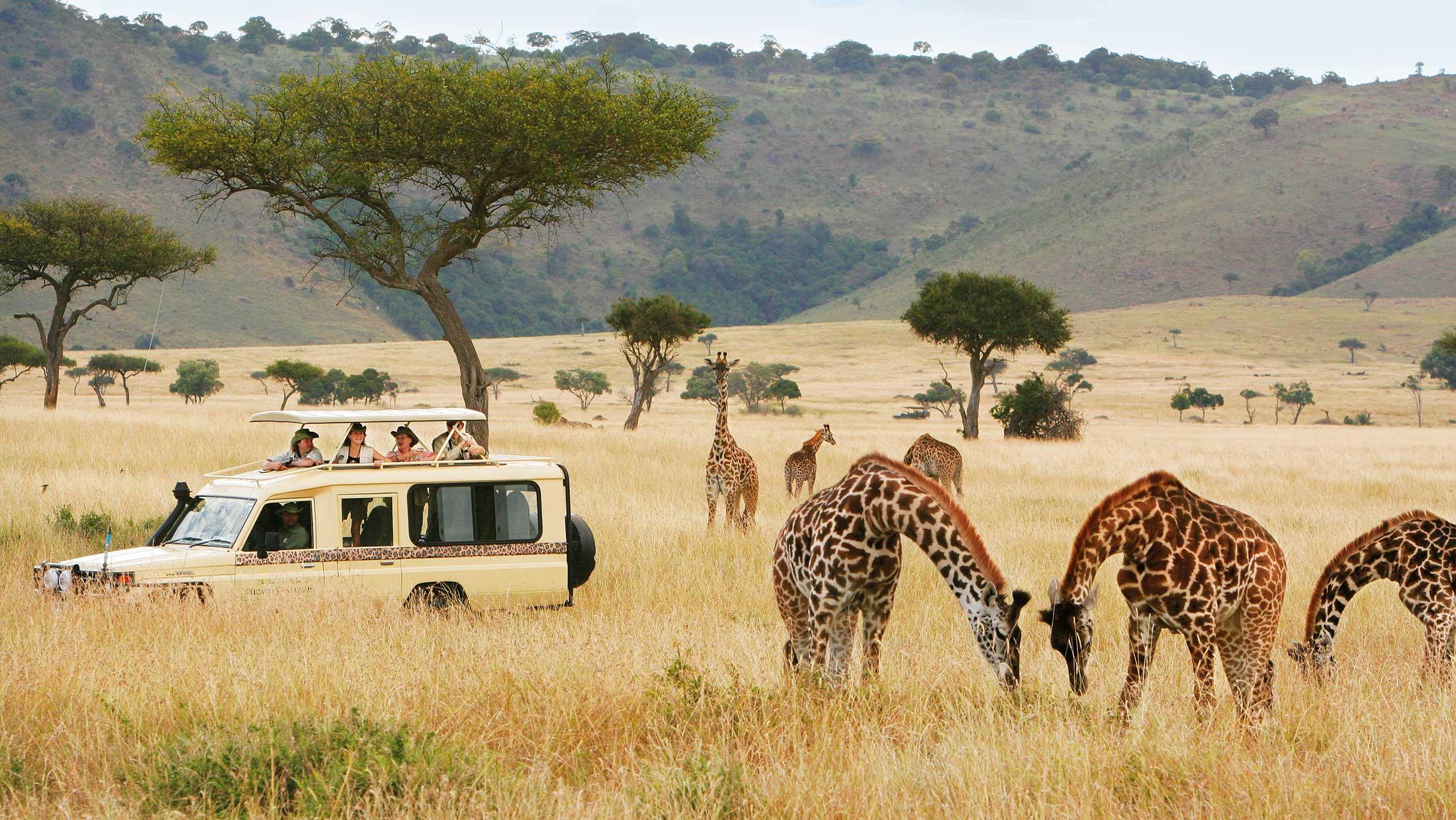 People having fun time with Micato Safari while watching Group of Giraffe