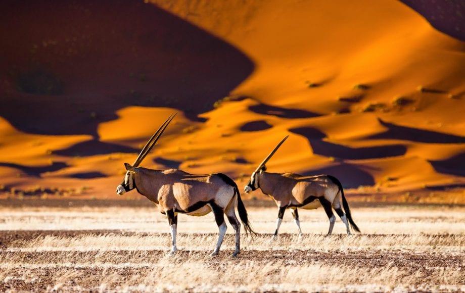 Namibia Desert Safari Wildlife