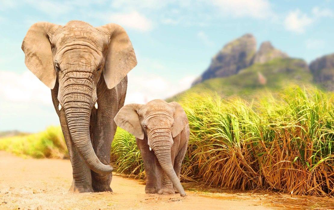 Baby-mother Elephant walking in Kruger