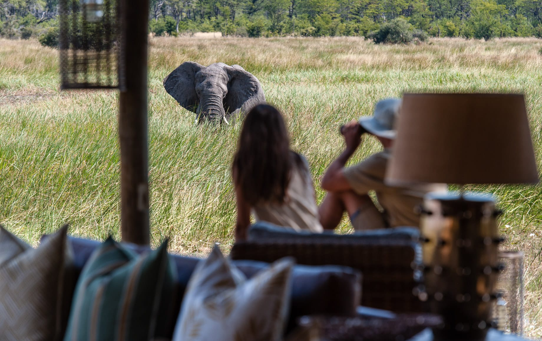 Watching elephant from camp at Sable Alley - Okavango Delta, Botswana‎