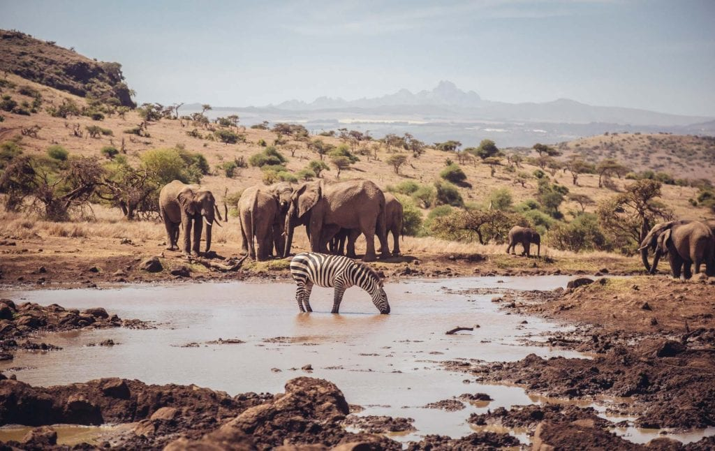 Elephants and a zebra standing by water