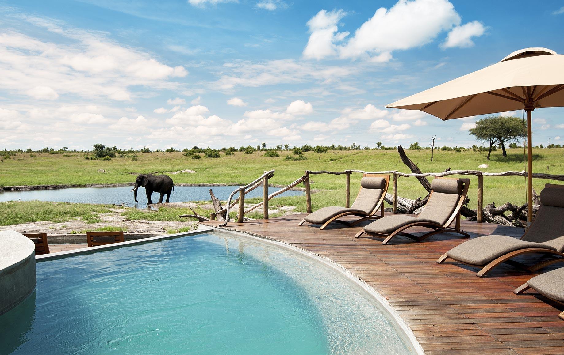 View of elephant across pool deck of Somalisa Lodge, Zimbabwe