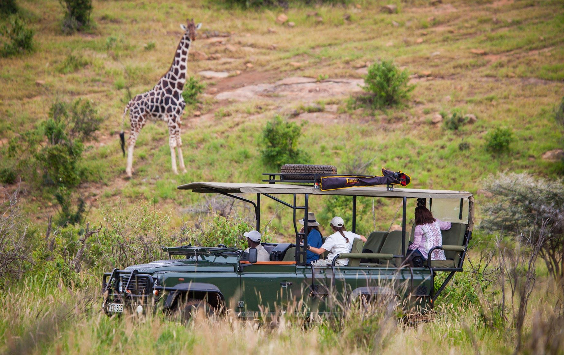 Safariers see giraffe at Loisaba Conservancy