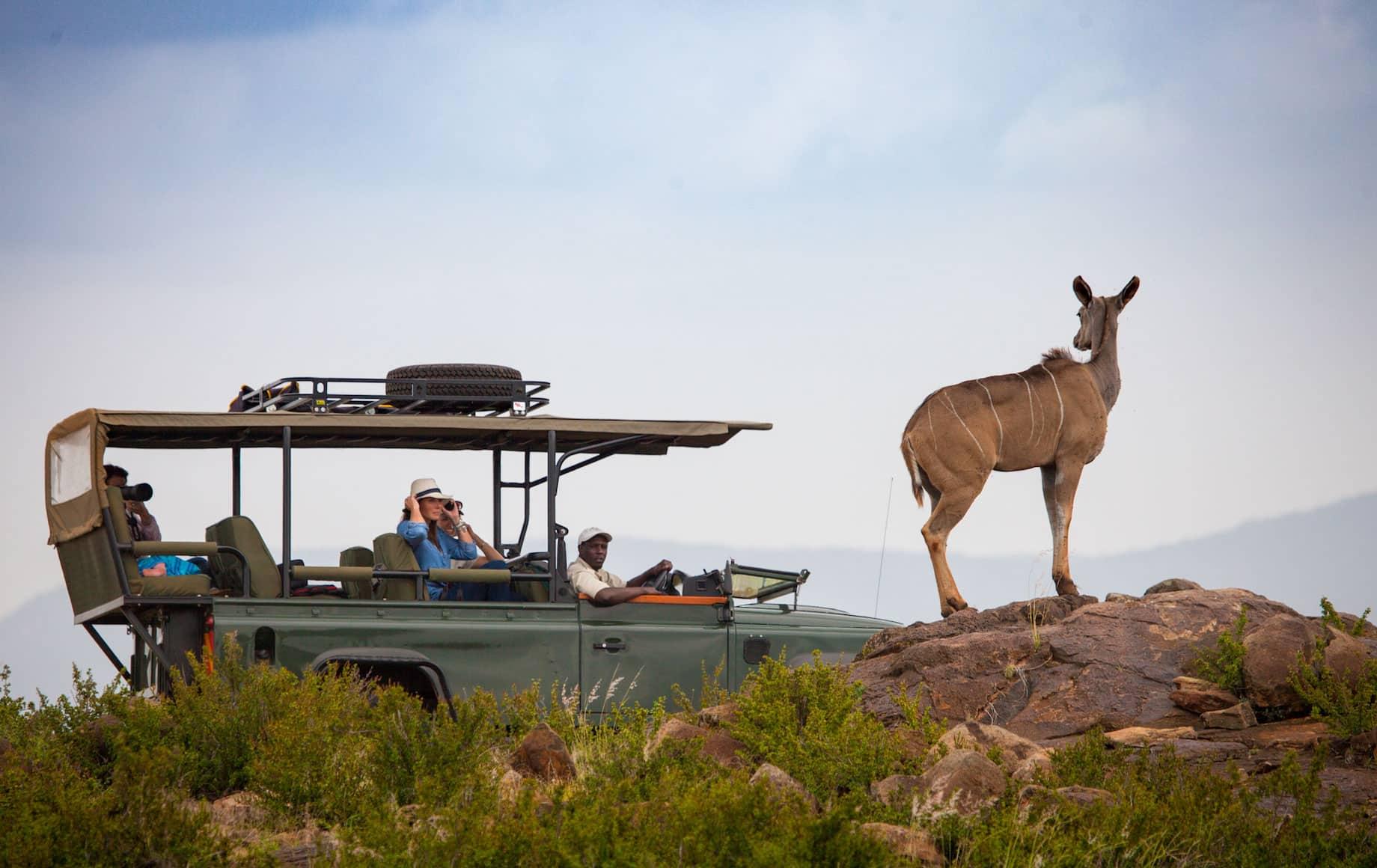 Safari-goers see African deer at Loisaba Conservancy