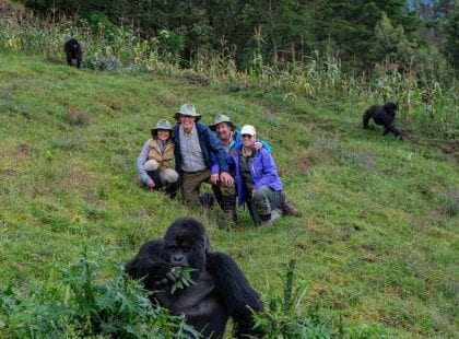 A group on a mountain with gorillas