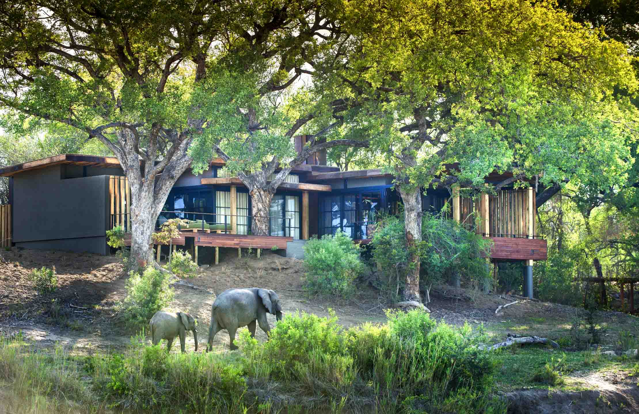Elephants walk by exterior of Tengile River Lodge suite