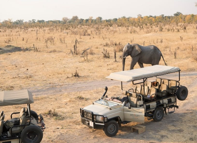 Elephants near a safari vehicle
