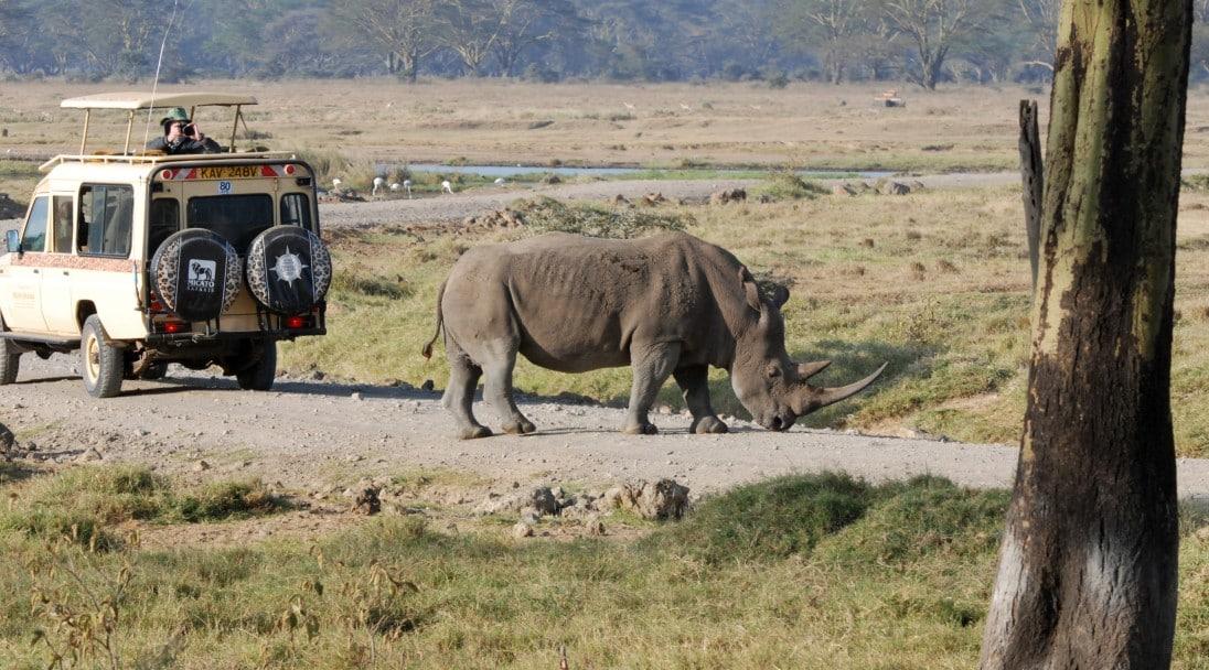 A rhino