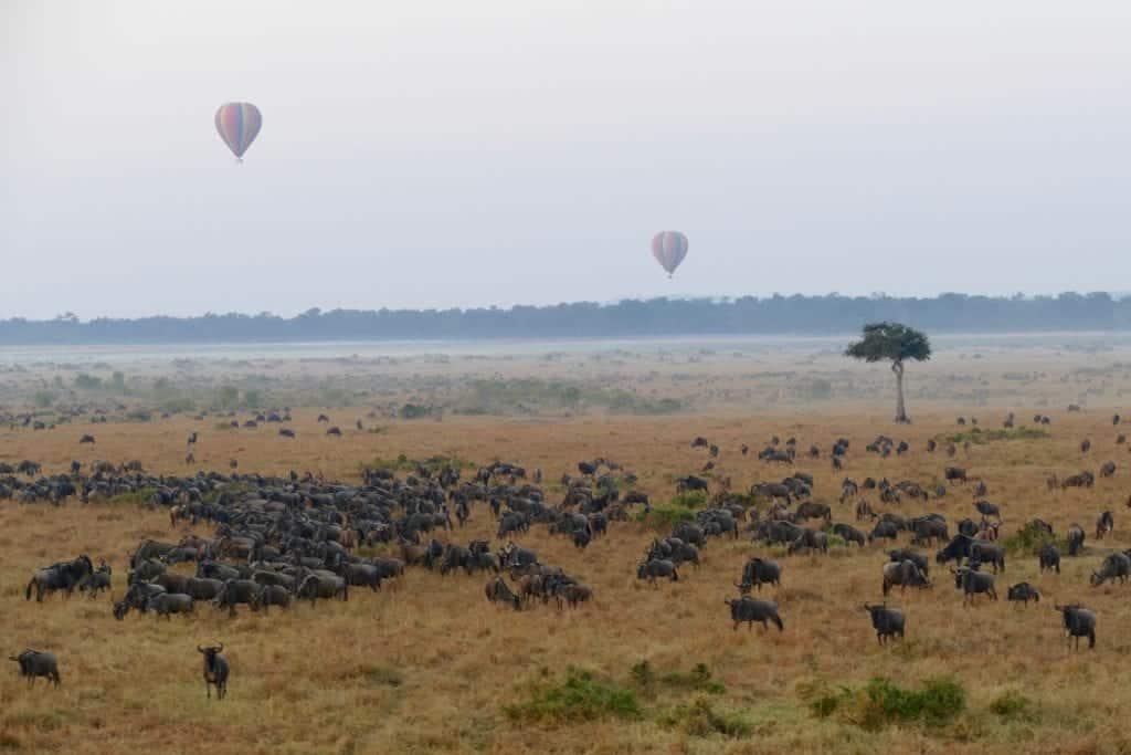 Great migration from balloon safari