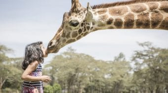 a giraffe kissing a little girl