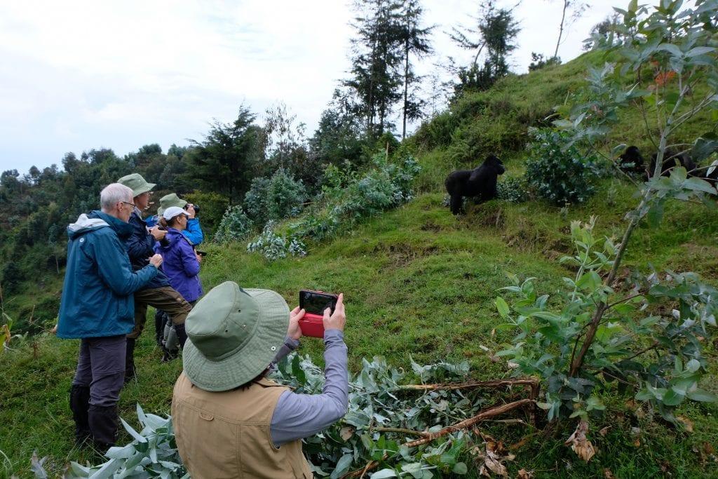 Micao Guests with Gorillas in Rwanda