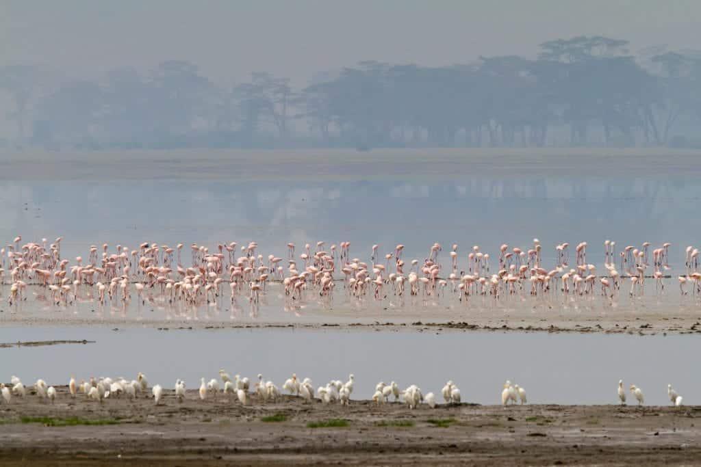 flamingos-ngorongoro-crater