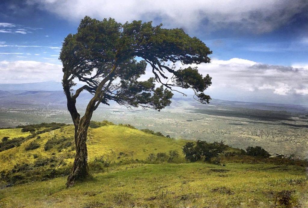 Kenya's Ngong Hills
