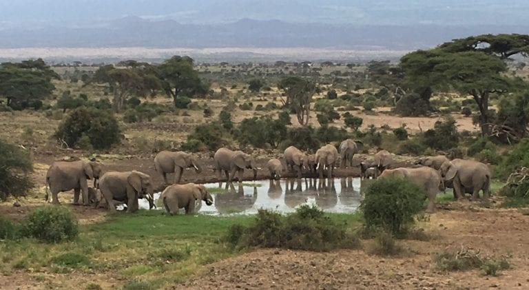 elephants at a waterhole in amboseli national park