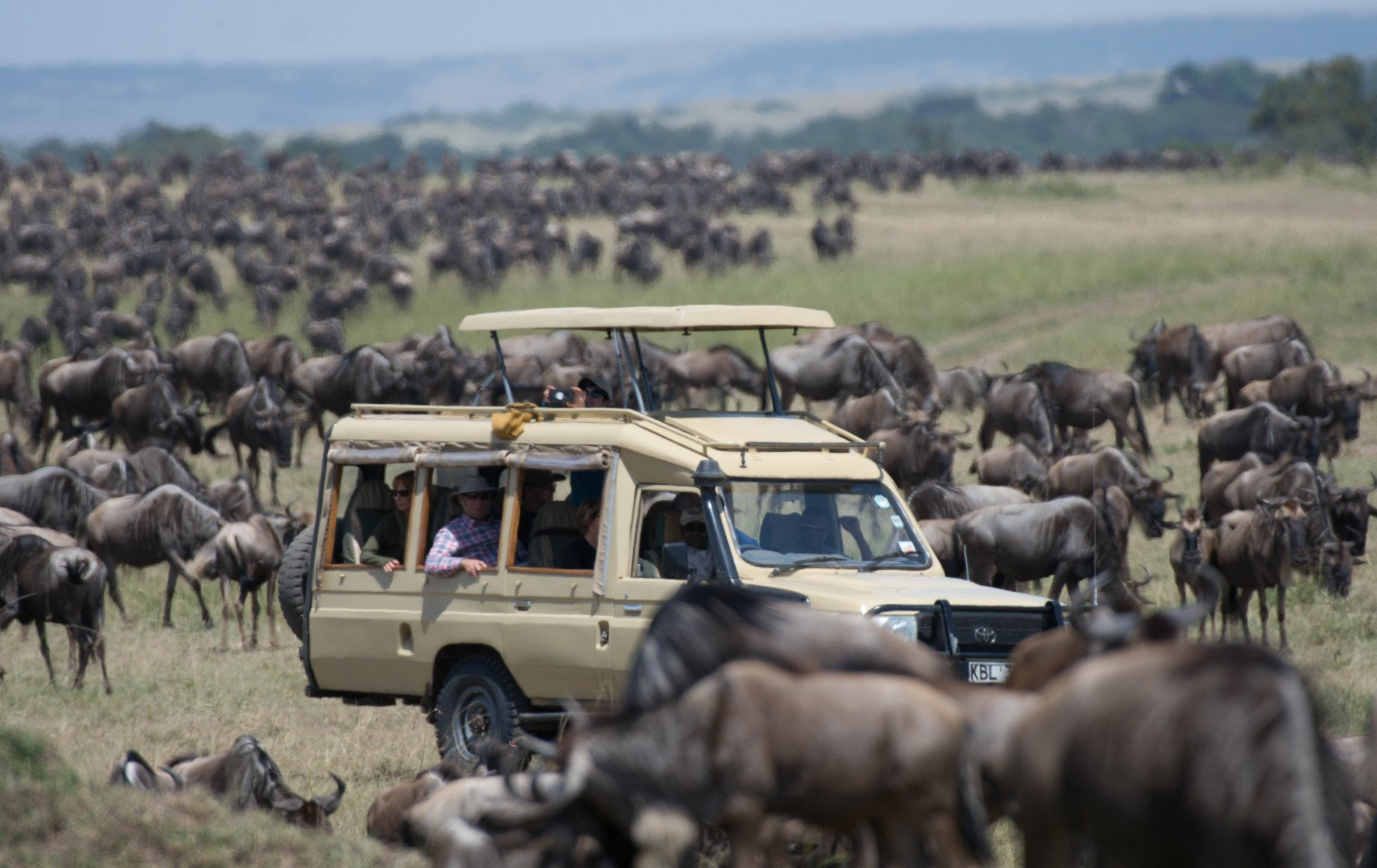 A jeep surrounded by rhinos