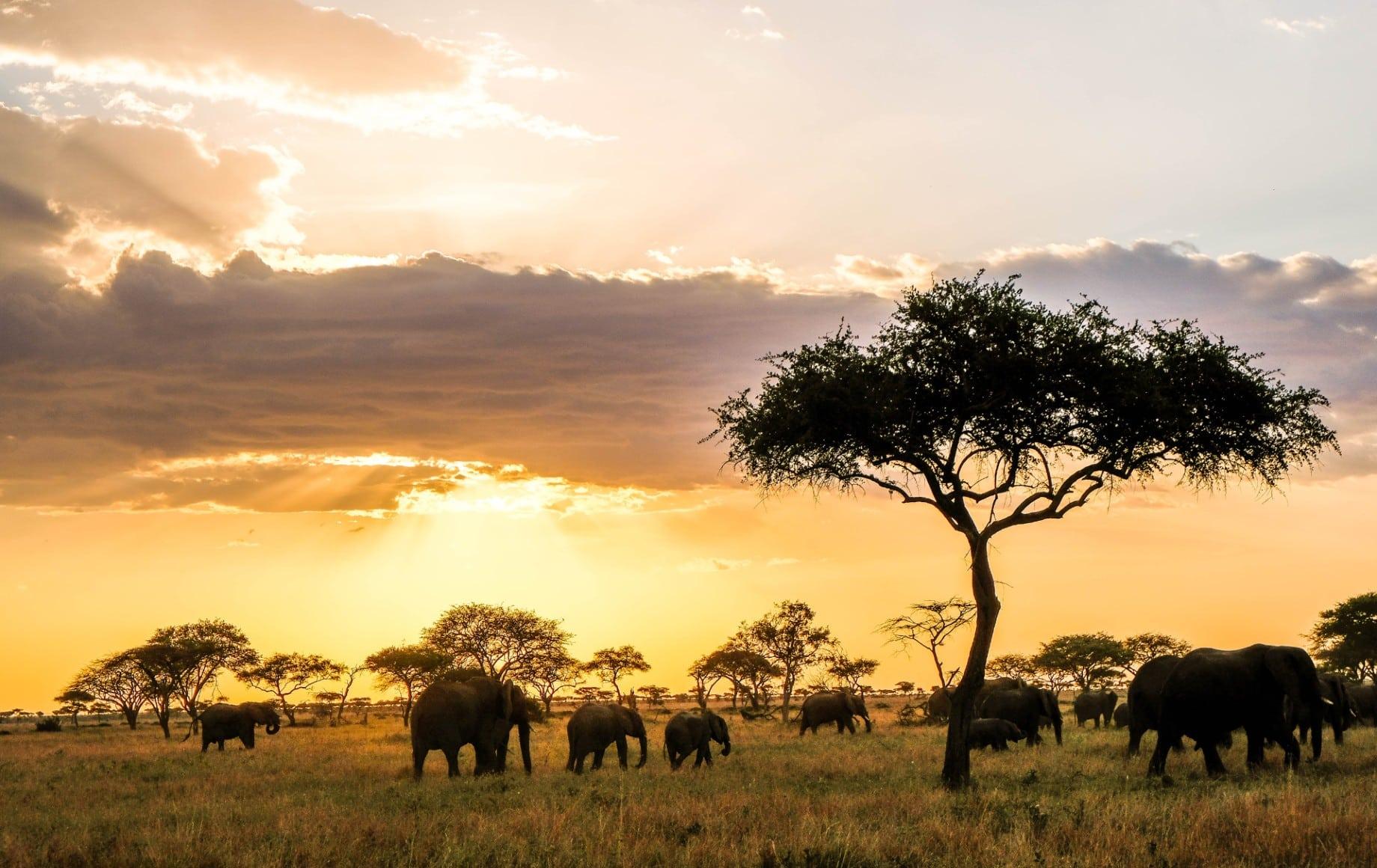 Elephants near a tree