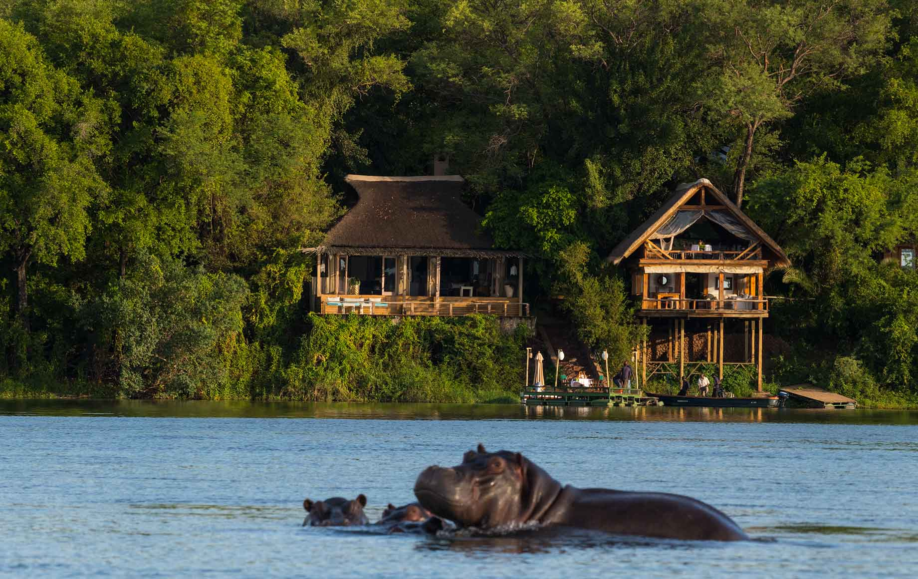 A hippo in the water in front of Camp Tongabezi