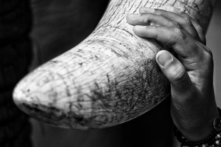 a hand on an elephant tusk