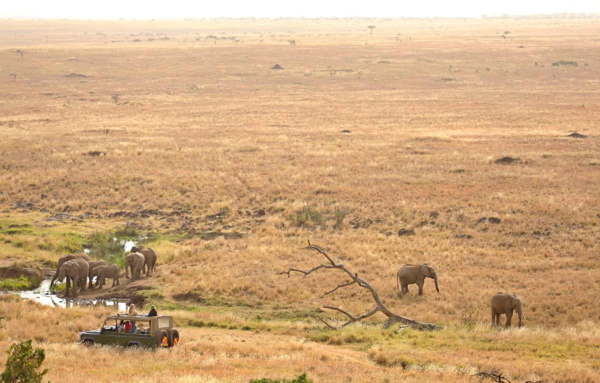 Elephants Jeep