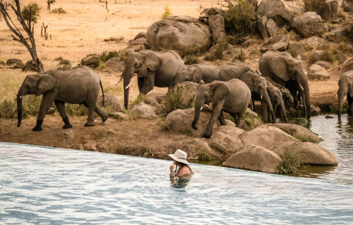 Elephant Pool