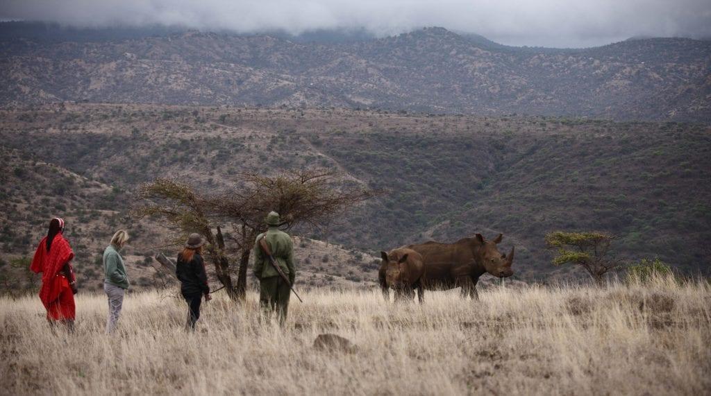 Walking Safari at Lewa Conservancy