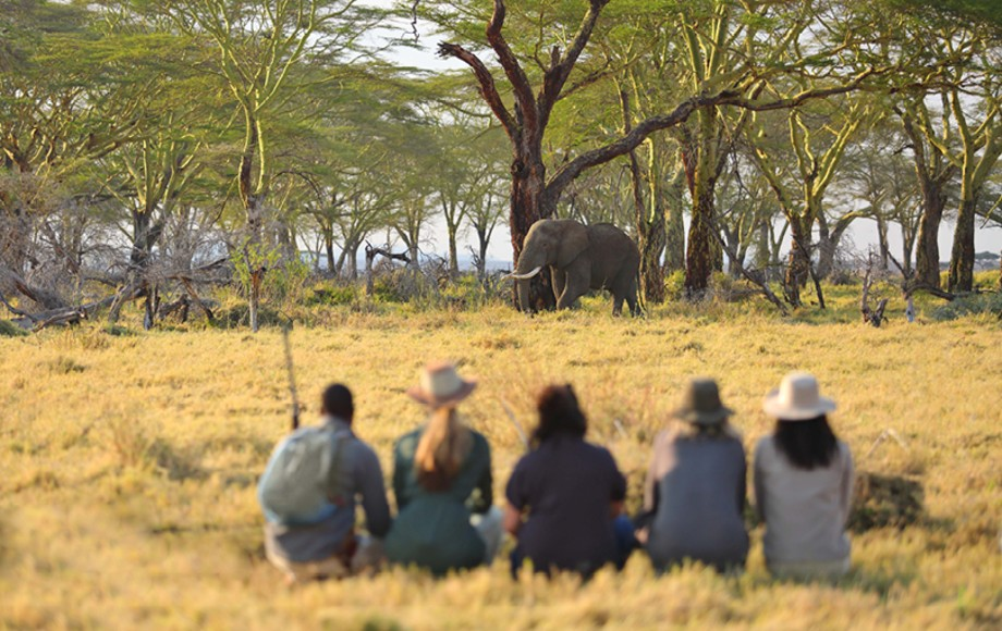 A group of tourists watching an elephant in Serengeti