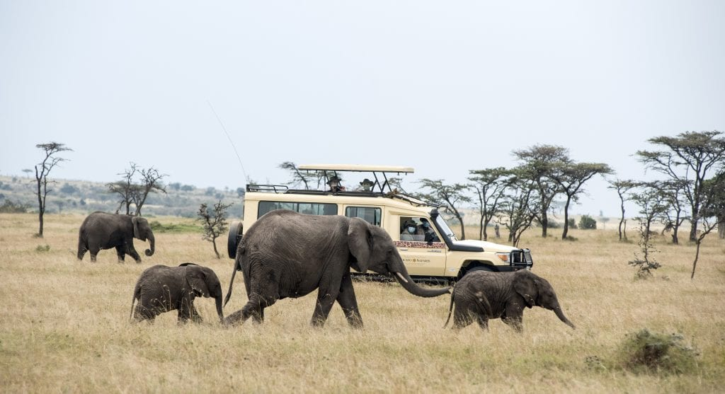 safari vehicle and elephants