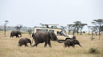 safari vehicle and elephants