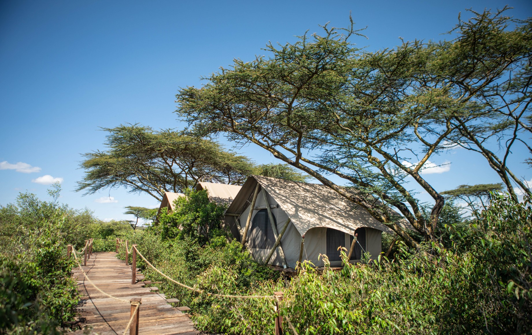 a tent surrounded by greenery at Mara Nyika