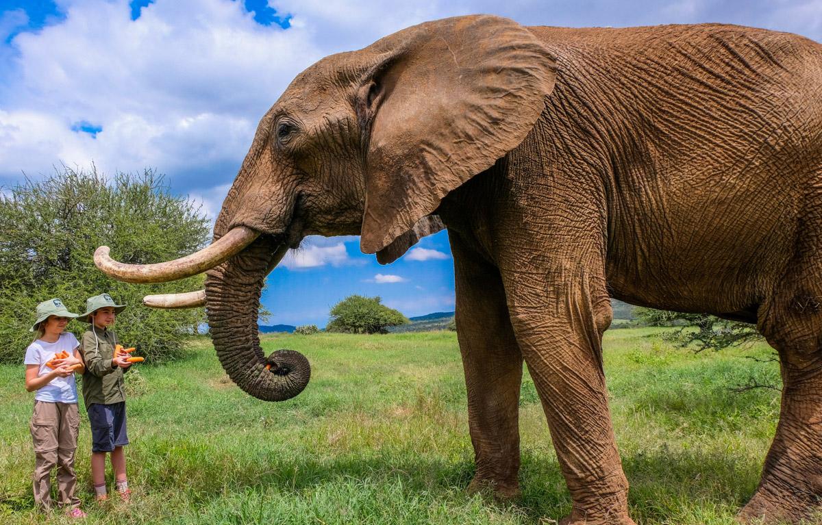 kids and an elephant