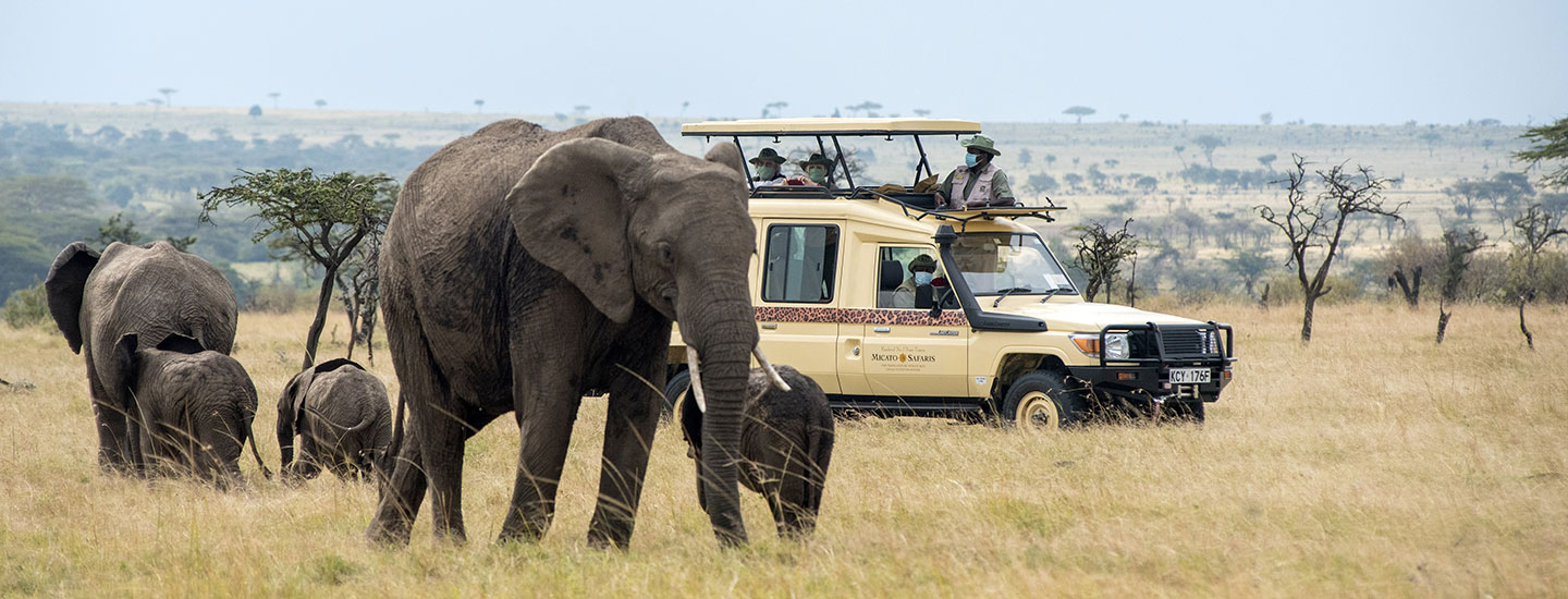 A safari vehicle with elephants passing by