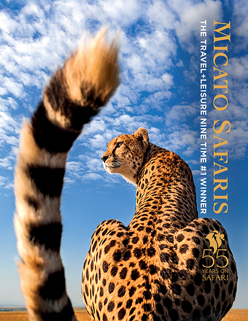 Micato Safaris 2021 brochure of a Cheetah