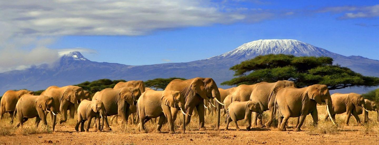 A herd of elephants walking across an open plain